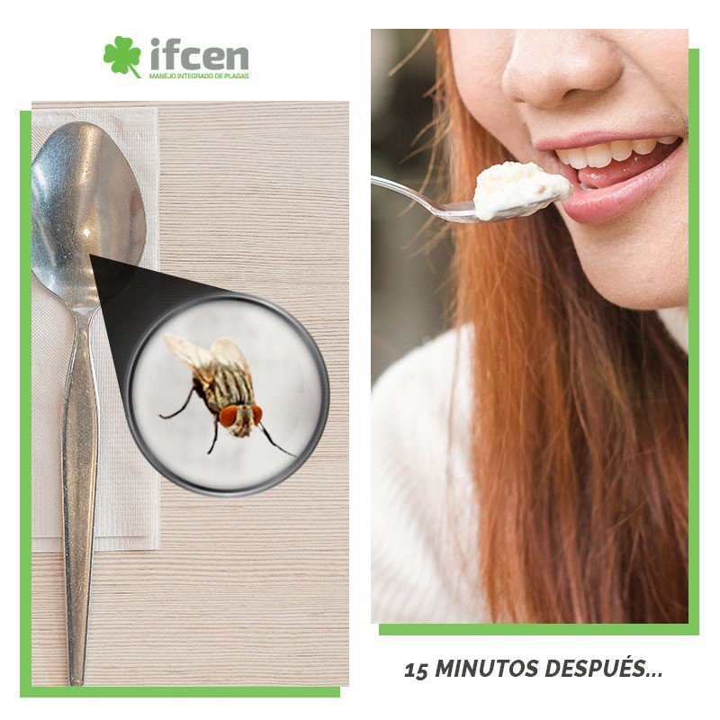 Cómo eliminar las moscas