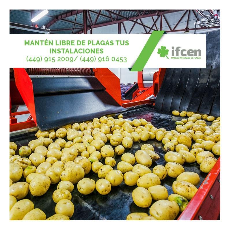 Mantén libre de plagas tus instalaciones con IFCEN