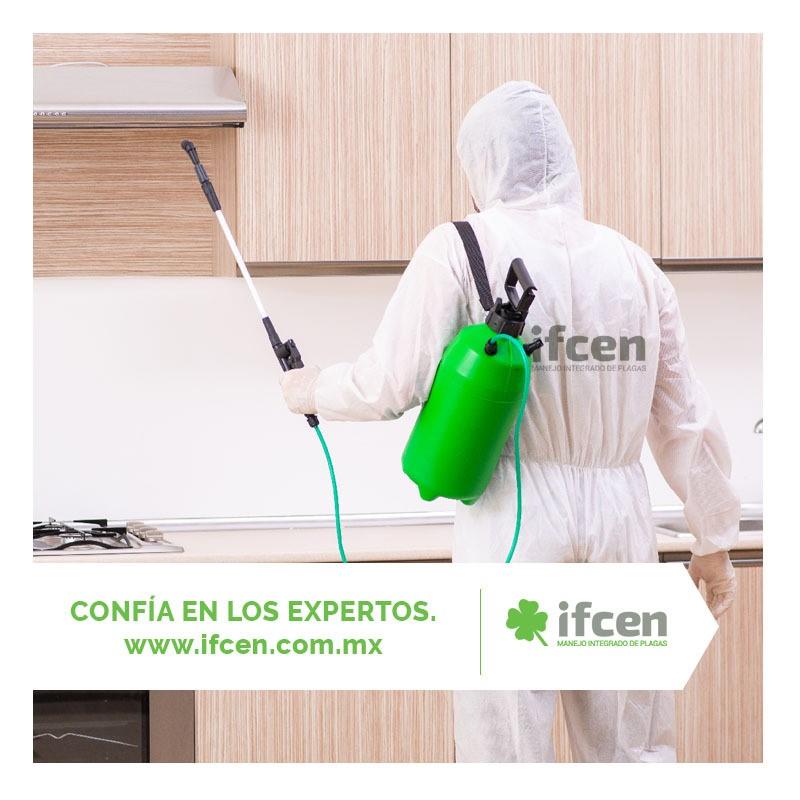 Fumigaciones en Aguascalientes con los expertos IFCEN