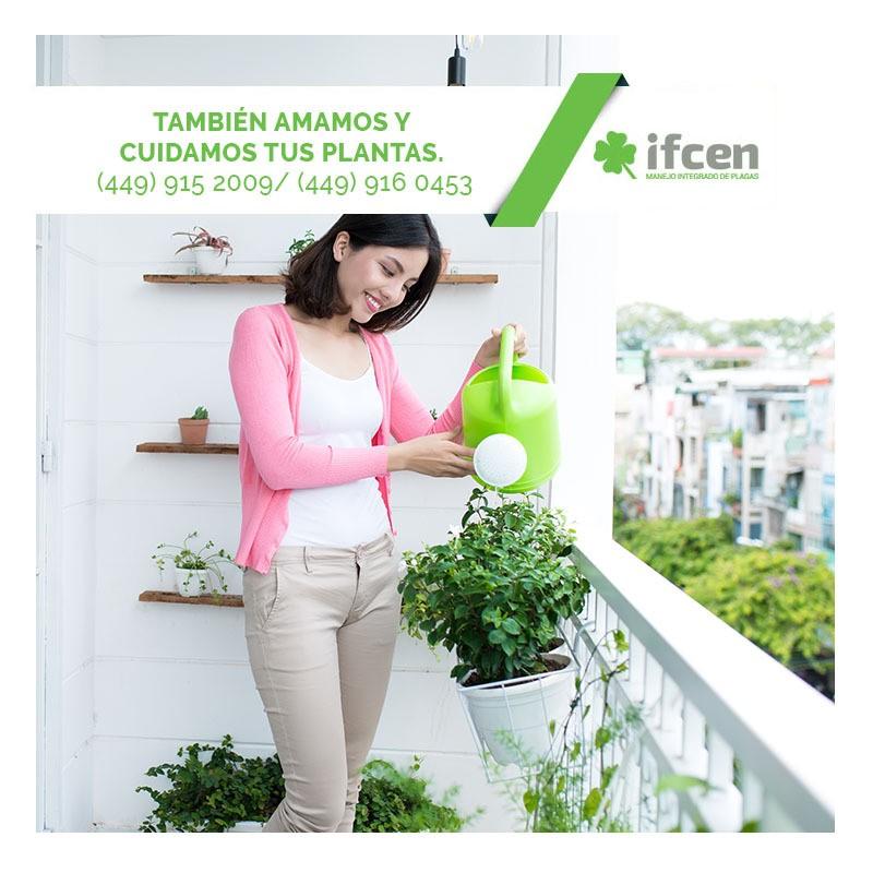 amamos y cuidamos tus plantas