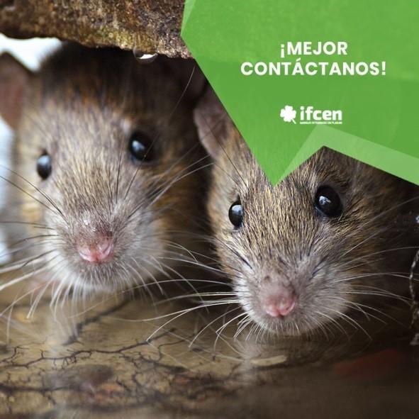 Fumigación de ratas